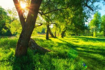 Summer nature scene