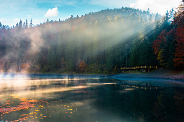 lake among the pine forest in autumn. beautiful nature scenery in mountains. foggy environment concept