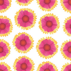 Vector floral seamless pattern with gaillardia flowers