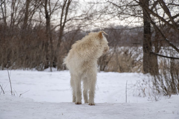 white dog in the winter snowy forest