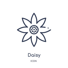 daisy icon from nature outline collection. Thin line daisy icon isolated on white background.