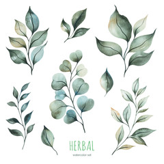 Watercolor Herbal collection.Texture with green leaves and branches.Perfect for wedding,invitations,greeting cards,quotes,pattern,bouquet,logos,Birthday cards and more