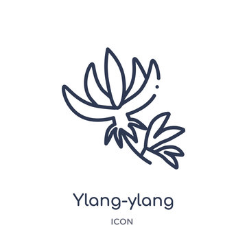 ylang-ylang icon from nature outline collection. Thin line ylang-ylang icon isolated on white background.