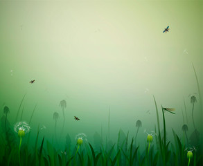 summer morning, morning fresh summer background with dandelions, dragonfly and butterfly,