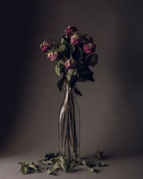Dry roses in milk bottle agains dark background