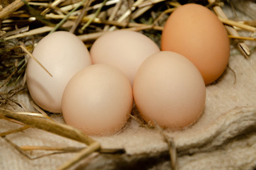 Eggs for hatching chickens