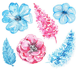 Set of variety of blue and pink flowers isolated on white background. Watercolor hand drawn illustration