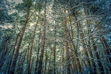 Wonderful forest in winter