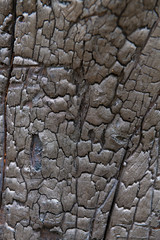 Burned tree trunk, closeup on wooden texture