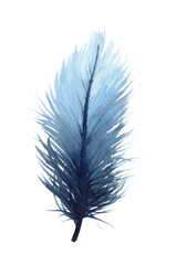 Watercolor illustration of an isolated blue feather on a white background. Watercolour blue feather.