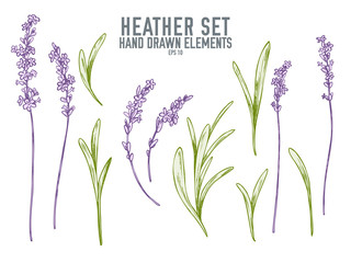 Vector collection of hand drawn pastel heather