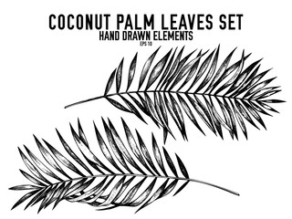 Vector collection of hand drawn black and white coconut palm leaves