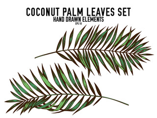 Vector collection of hand drawn colored  coconut palm leaves
