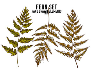 Vector collection of hand drawn colored  fern