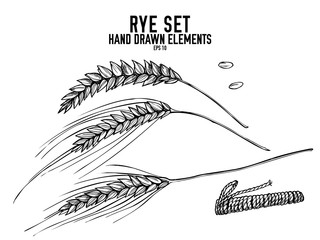 Vector collection of hand drawn black and white rye