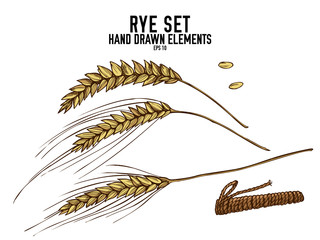 Vector collection of hand drawn colored  rye