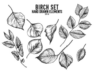Vector collection of hand drawn black and white birch Wall mural