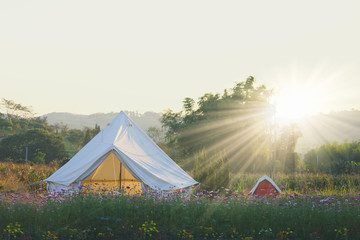 summer white camping in flowers field in the morning.