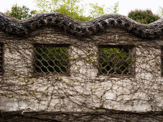 Chinese garden wall covered with vines