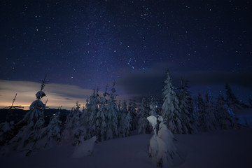 Snowy forest and stars in sky