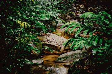 asian tropical jungle. Palm leaves. Dark green palm foliage