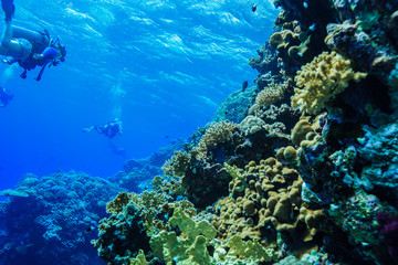 Coral reef at the Red Sea Egypt