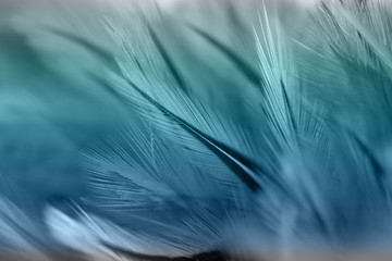 Colorful bird and chicken feathers in soft and blur style for the background Fototapete