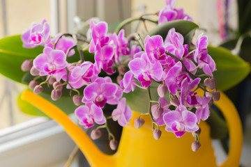 retty Blooming Purple Orchid flower - Image.