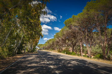 Empty rural road surrounded with trees Sardegna, Italy