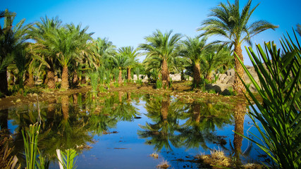 Oasis near Third Cataract of Nile near Tombos in Sudan