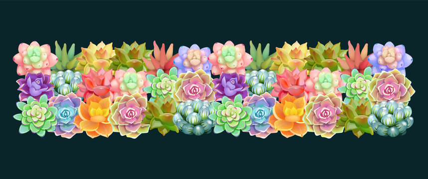 Beautiful horizontal tape of succulents flowers.Elegant vector floral collection. Can be used for greeting card or wedding invitation, natural cosmetics, health care, yoga center and other design