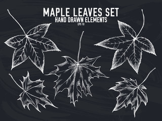 Vector collection of hand drawn chalk maple leaves