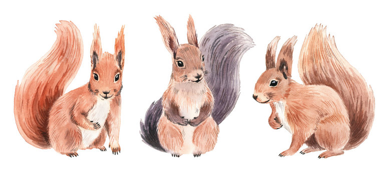Realistic squirrels in watercolor style.