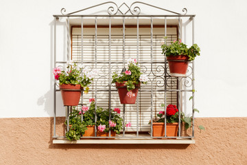 Pelargoniums in Clay Flowerpots at a Window in Estepona Andalusia Spain