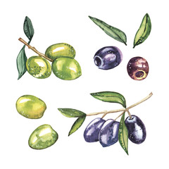 Watercolor hand-painted nature green olives illustration set on white background