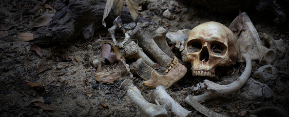The skulls and pile bone in pit the graveyard; discover by dig in cemetery