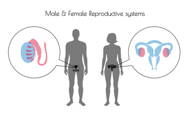 Vector reproductive system