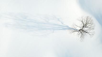 Laubbaum im Schnee