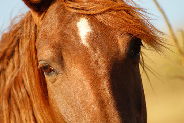 Cavalo olhando de perto