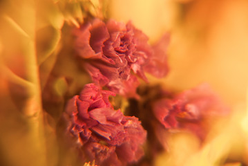 Blur background with dry flowers in macro. Floral abstract photography. Soft romantic pattern.