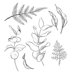 Black and white pencil sketch illustration of eucalyptus and fern leaves.