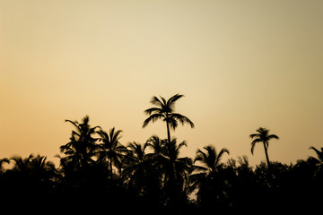 black silhouettes of palm jungle on the gray sky of the evening sky