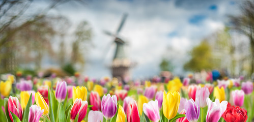 Spring background with tulip flowers