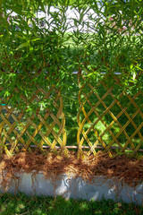 Composition et aménagement de jardin : haie vivante en saule