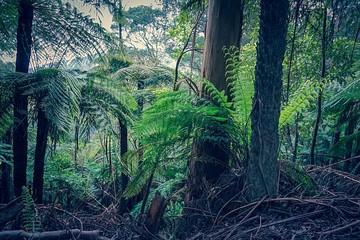 Wonderful rainforest in Australia