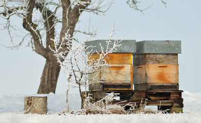 bee hives in snowy orchard