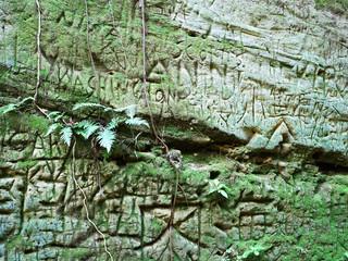 無人島・猿島のシダと壁画