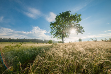 Morning landscape with lonely tree on meadow