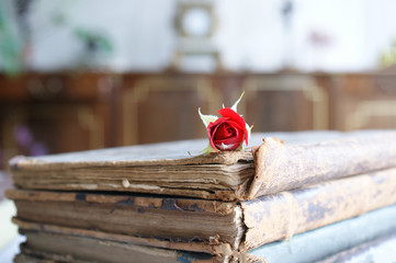 old book and rose. old vintage books and small red rose