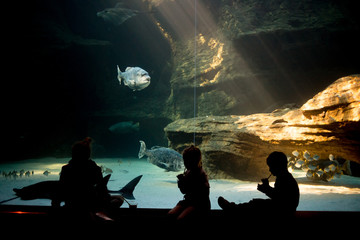 Wide angle image of a group of people sitting in an aquarium looking at the fish